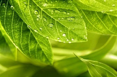 Фото Golden Tile декор Relax зеленый 25x40 (494311)