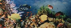 Атем декор Yalta 2 Sea 20x50 (15899)