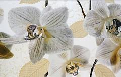 TAU Ceramica декор-панно Alma Flor 40x60 (комплект 2 шт)