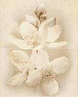 Cersanit декор-панно ДИАНА (DIANA) Цветок 40x50 (комплект 2 шт)