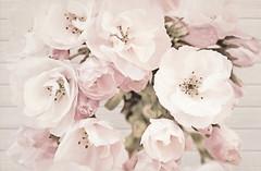 Фото Cersanit декор САКУРА (SAKURA) Цветок 30x45