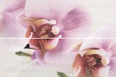 Cristal Ceramica декор-панно Dilan Decor Orquidea 50x75 (комплект 2 шт)