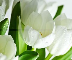 Marconi декор-панно Arco Digital Tulipany 50x60 (комплект 2 шт)