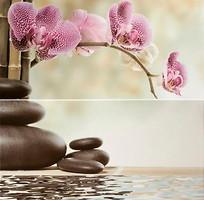 Belani декор-панно Фрезия Орхидея зеленое 50x50 (комплект 2 шт)