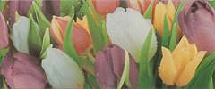 Атем декор Alana 1 Tulip VC 25x60 (18775)