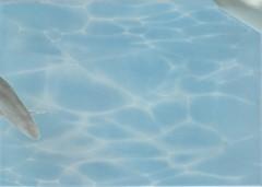 БерезаКерамика декор Лазурь Дельфин 7 бирюзовый 25x35