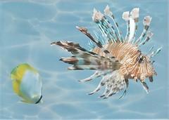 Фото БерезаКерамика декор Лазурь Морской мир 2 бирюзовый 25x35