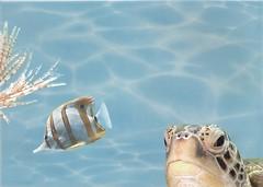 БерезаКерамика декор Лазурь Морской мир 7 бирюзовый 25x35