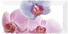 Monopole Ceramica декор Orchidea-1 10x20
