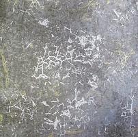 Wallquest Savona CF31617