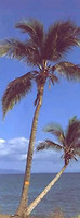 Komar Products Palm Tree 2-1028