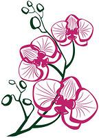 Glozis Orchid