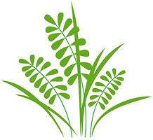Glozis Herb
