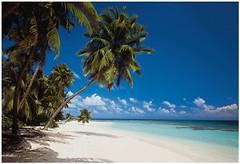 Фото Komar Products Maledives 8-240
