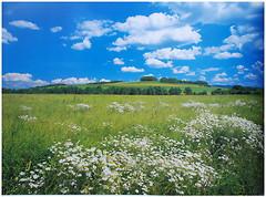Komar Products Meadow 8-254