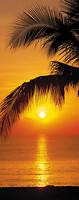 Фото Komar Products Palmy Beach Sunrise 2-1255