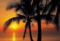 Komar Products Palmy Beach Sunrise 4-255