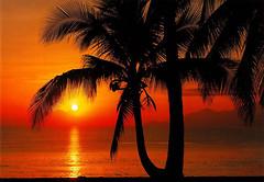 Фото Komar Products Palmy Beach Sunrise 8-255