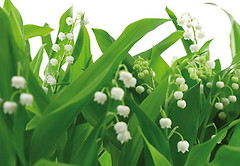 Komar Products Lilies of the Valley 8-517