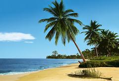 Фото Komar Products African Beach 8-074