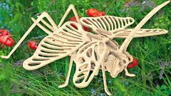 Фото Мир деревянных игрушек Саранча (Е027)
