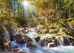 Фото Castorland Лесной ручей (C-200382)