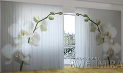 Wellmira Рижская орхидея 270x500