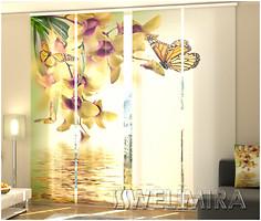 Wellmira Тропические орхидеи 240x240