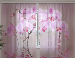 Wellmira Лилейная орхидея 250x260